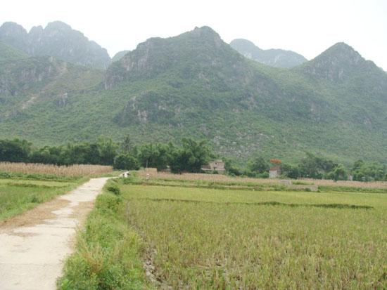 Giáo họ Tiền Phong